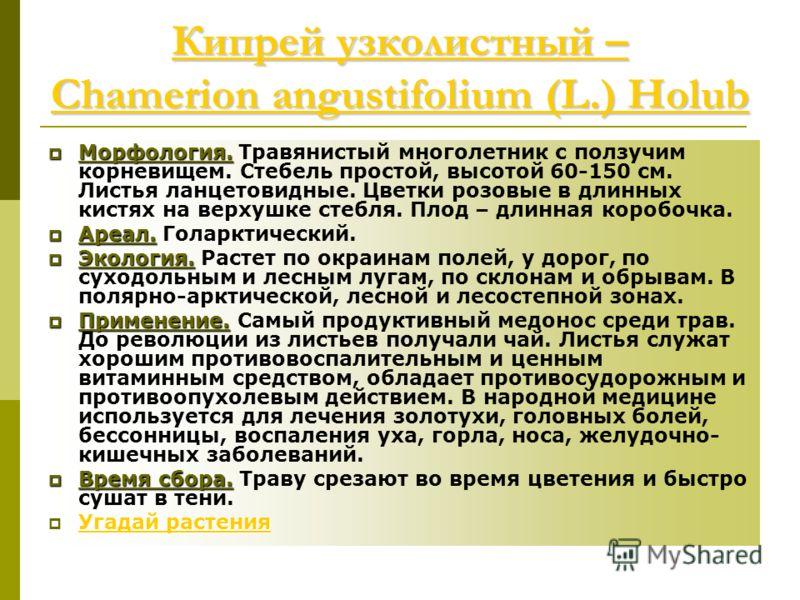 Кипрей узколистный – Chamerion angustifolium (L.) Holub Кипрей узколистный – Chamerion angustifolium (L.) Holub Морфология. Морфология. Травянистый многолетник с ползучим корневищем. Стебель простой, высотой 60-150 см. Листья ланцетовидные. Цветки ро