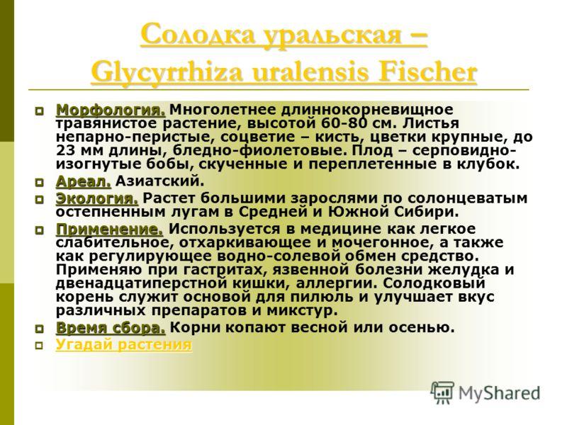 Солодка уральская – Glycyrrhiza uralensis Fischer Солодка уральская – Glycyrrhiza uralensis Fischer Морфология. Морфология. Многолетнее длиннокорневищное травянистое растение, высотой 60-80 см. Листья непарно-перистые, соцветие – кисть, цветки крупны
