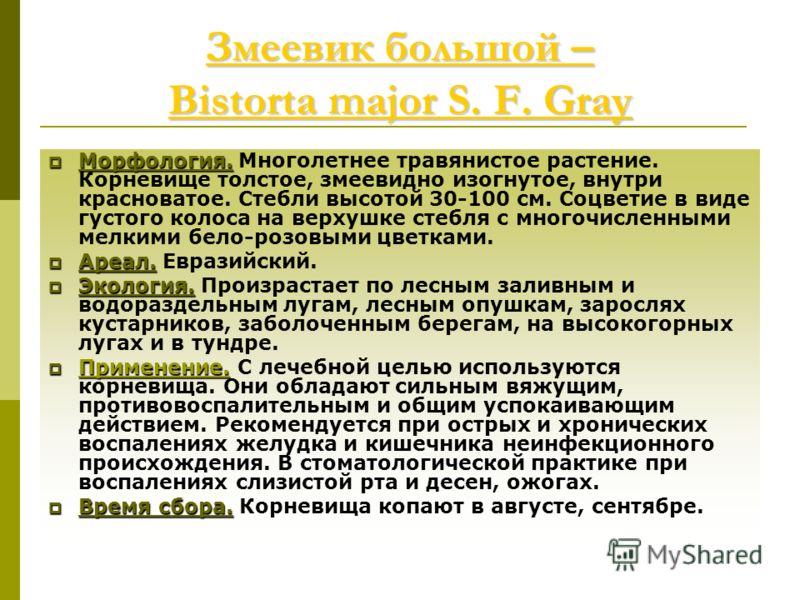 Змеевик большой – Bistorta major S. F. Gray Змеевик большой – Bistorta major S. F. Gray Морфология. Морфология. Многолетнее травянистое растение. Корневище толстое, змеевидно изогнутое, внутри красноватое. Стебли высотой 30-100 см. Соцветие в виде гу