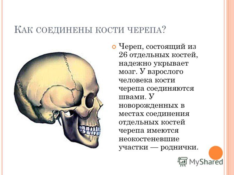К АК СОЕДИНЕНЫ КОСТИ ? Самые длинные кости человека напоминают трубки. Их так и называют трубчатые кости. Внутри них находятся полости, в которых спрятано питательное вещество. Получается, что кости рук и ног похожи на футляры, в которых организм пря