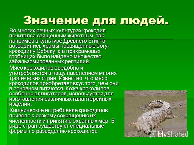 Значение для людей. Значение для людей. Во многих речных культурах крокодил почитался священным животным, так например в культуре Древнего Египта возводились храмы посвящённые богу- крокодилу Себеку, а в прихрамовых гробницах было найдено множество з