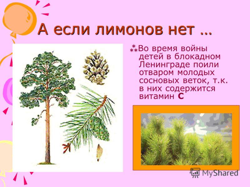 А если лимонов нет … Во время войны детей в блокадном Ленинграде поили отваром молодых сосновых веток, т.к. в них содержится витамин С