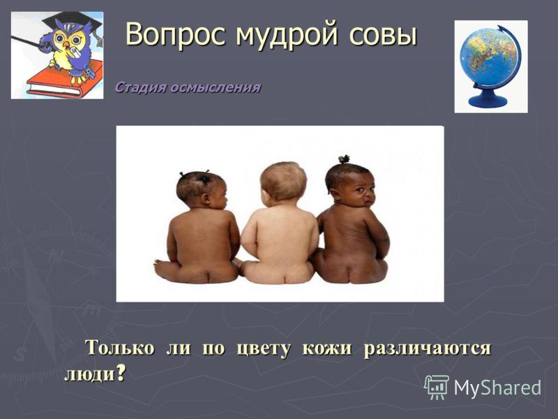 Вопрос мудрой совы Только ли по цвету кожи различаются люди? Стадия осмысления