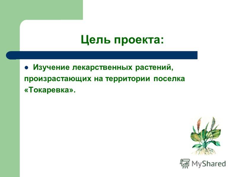 Цель проекта: Изучение лекарственных растений, произрастающих на территории поселка «Токаревка».