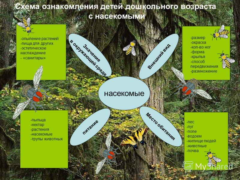 Схема ознакомления детей дошкольного возраста с насекомыми Схема ознакомления детей дошкольного возраста с насекомыми насекомые Внешний вид Место обитания питание Значение в окружающей среде -пыльца -нектар -растения -насекомые -трупы животных -опыле