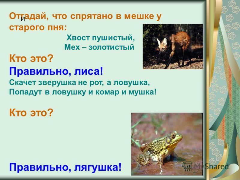 Отгадай, что спрятано в мешке у старого пня: Хвост пушистый, Мех – золотистый Кто это? Правильно, лиса! Скачет зверушка не рот, а ловушка, Попадут в ловушку и комар и мушка! Кто это? Правильно, лягушка! И