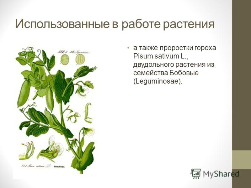 Использованные в работе растения а также проростки гороха Pisum sativum L., двудольного растения из семейства Бобовые (Leguminosae).