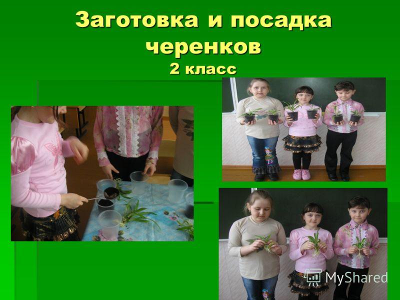Заготовка и посадка черенков 2 класс