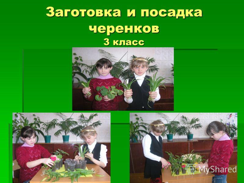 Заготовка и посадка черенков 3 класс