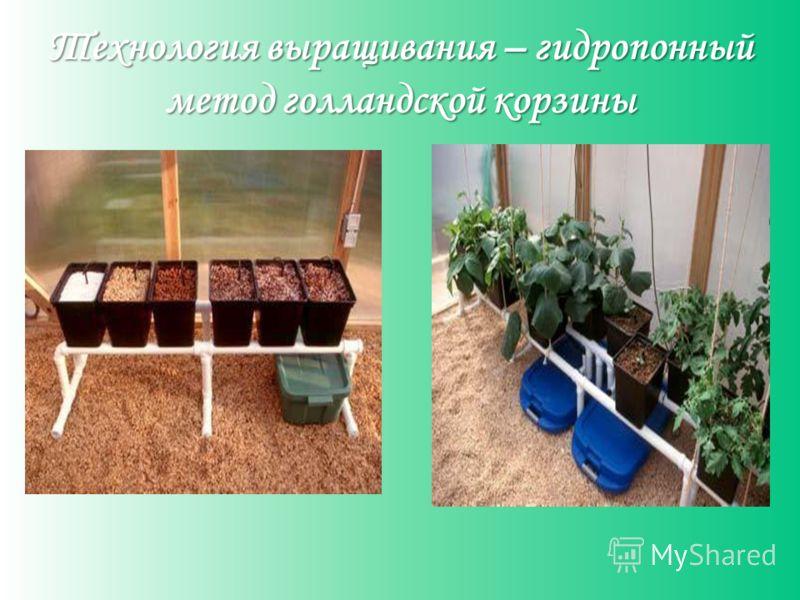 Технология выращивания – гидропонный метод голландской корзины