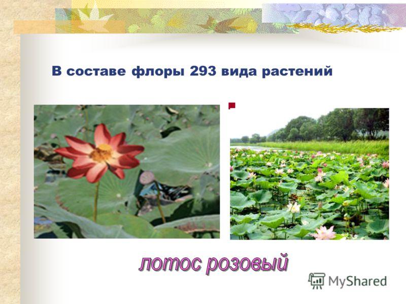 В составе флоры 293 вида растений