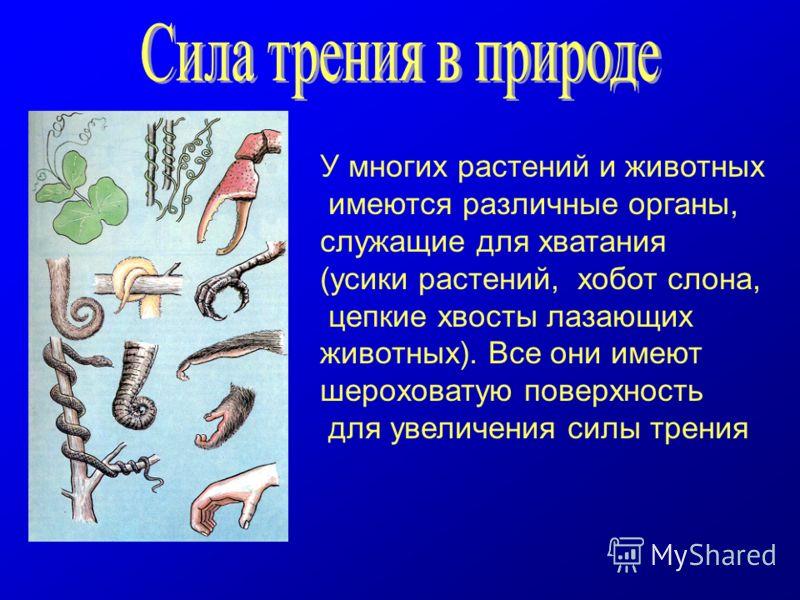 У многих растений и животных имеются различные органы, служащие для хватания (усики растений, хобот слона, цепкие хвосты лазающих животных). Все они имеют шероховатую поверхность для увеличения силы трения