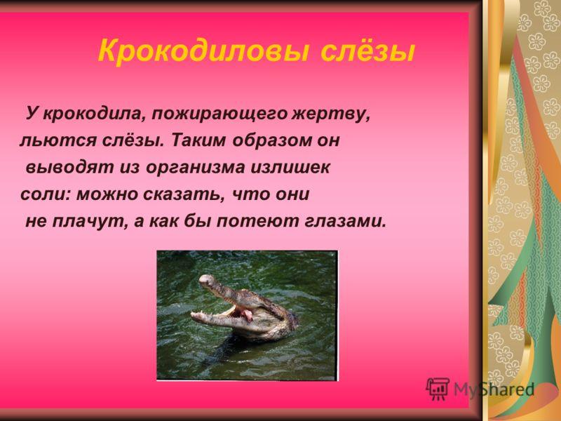 Крокодиловы слёзы У крокодила, пожирающего жертву, льются слёзы. Таким образом он выводят из организма излишек соли: можно сказать, что они не плачут, а как бы потеют глазами.