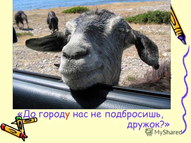 В Чернушку добраться бывает нам мука: Автобус сломался, не чистят дорог… Но вовремя всё же стремимся приехать: «До городу нас не подбросишь, дружок?»