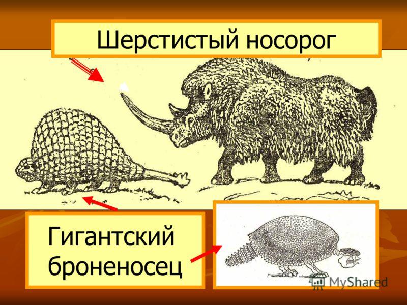 Шерстистый носорог Гигантский броненосец