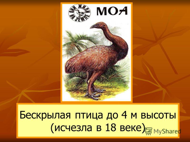 Бескрылая птица до 4 м высоты (исчезла в 18 веке)