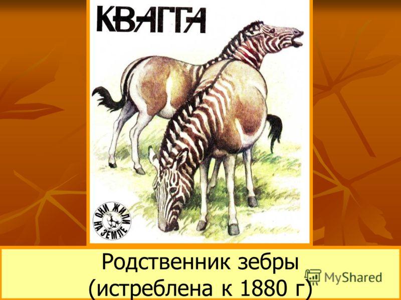 Родственник зебры (истреблена к 1880 г)