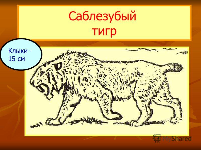 Саблезубый тигр Клыки - 15 см
