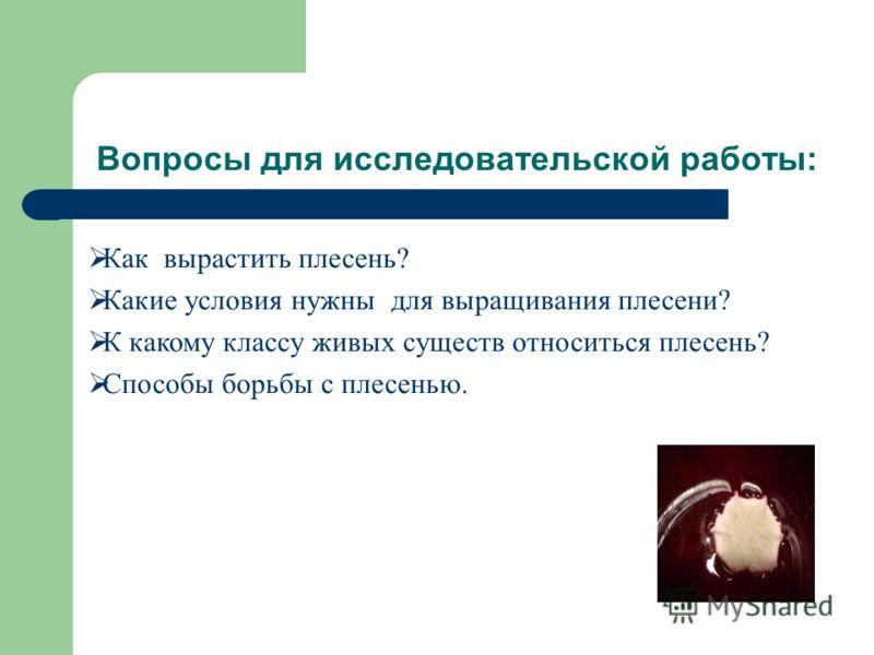 Вопросы для исследовательской работы: Как вырастить плесень? Какие условия нужны для выращивания плесени? К какому классу живых существ относиться плесень? Способы борьбы с плесенью.