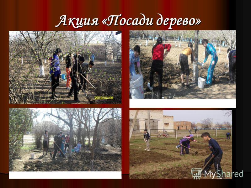 Акция «Посади дерево» Акция «Посади дерево»