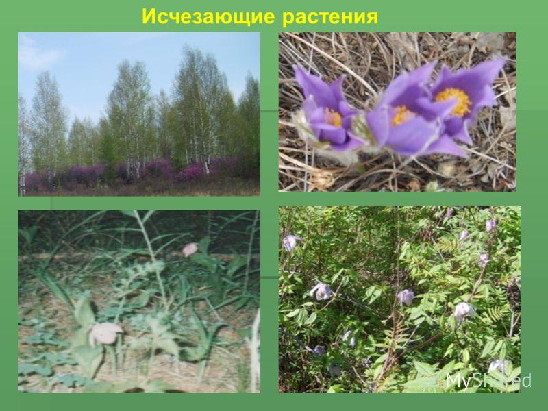 Исчезающие растения