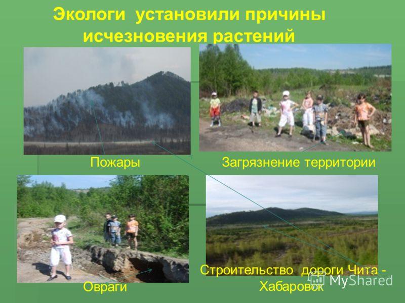 Экологи установили причины исчезновения растений Пожары Строительство дороги Чита - Хабаровск Овраги Загрязнение территории