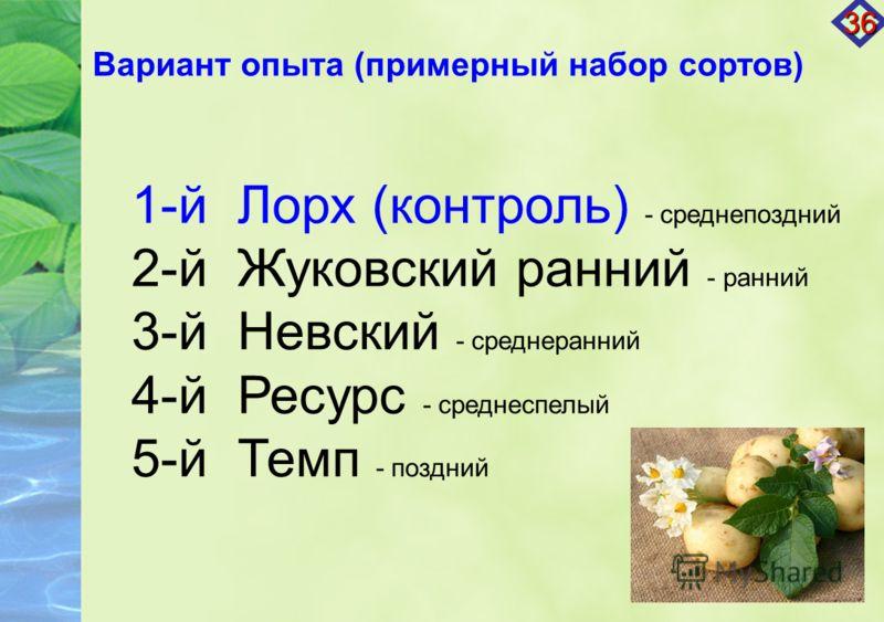 Вариант опыта (примерный набор сортов) 1-й Лорх (контроль) - среднепоздний 2-й Жуковский ранний - ранний 3-й Невский - среднеранний 4-й Ресурс - среднеспелый 5-й Темп - поздний 36