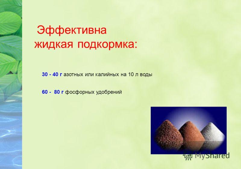 Эффективна жидкая подкормка: 60 - 80 г фосфорных удобрений 30 - 40 г азотных или калийных на 10 л воды