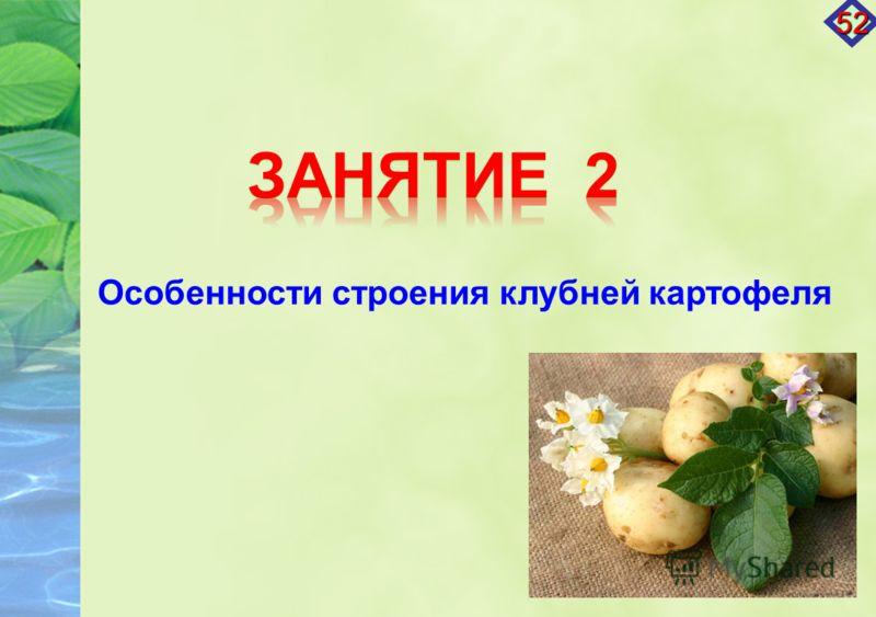 Особенности строения клубней картофеля 52