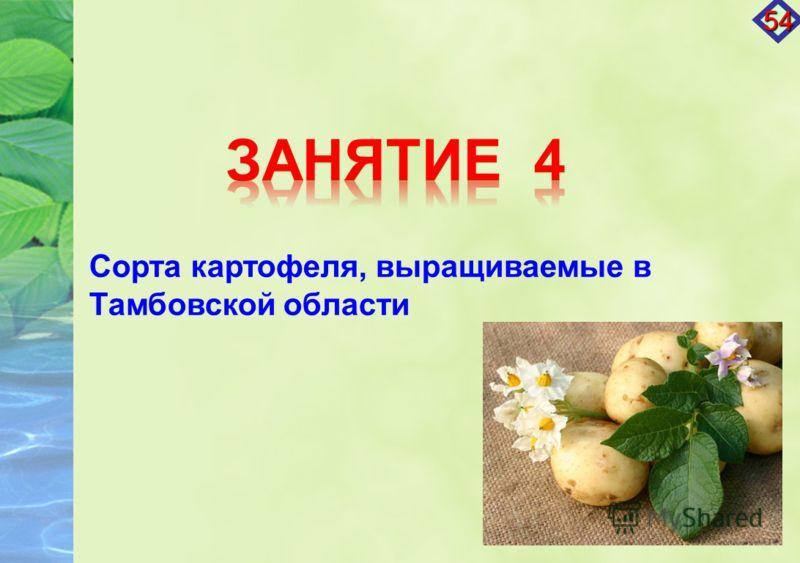 Сорта картофеля, выращиваемые в Тамбовской области 54