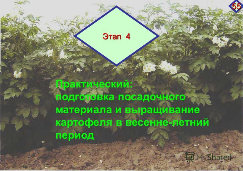 Практический: подготовка посадочного материала и выращивание картофеля в весенне-летний период Этап 4 55