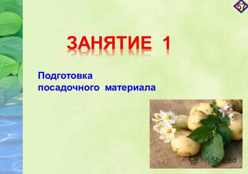 Подготовка посадочного материала 57