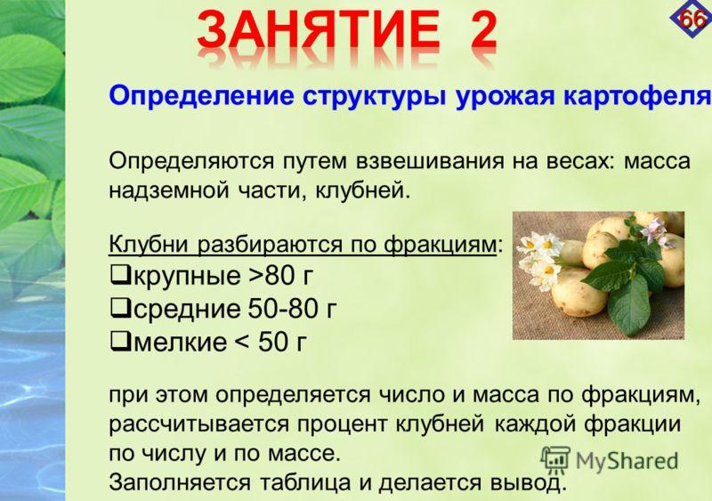 Определение структуры урожая картофеля Определяются путем взвешивания на весах: масса надземной части, клубней. Клубни разбираются по фракциям: крупные >80 г средние 50-80 г мелкие < 50 г при этом определяется число и масса по фракциям, рассчитываетс