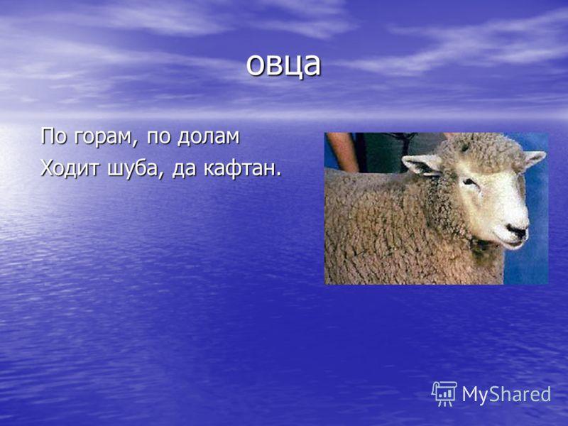 овца По горам, по долам По горам, по долам Ходит шуба, да кафтан. Ходит шуба, да кафтан.