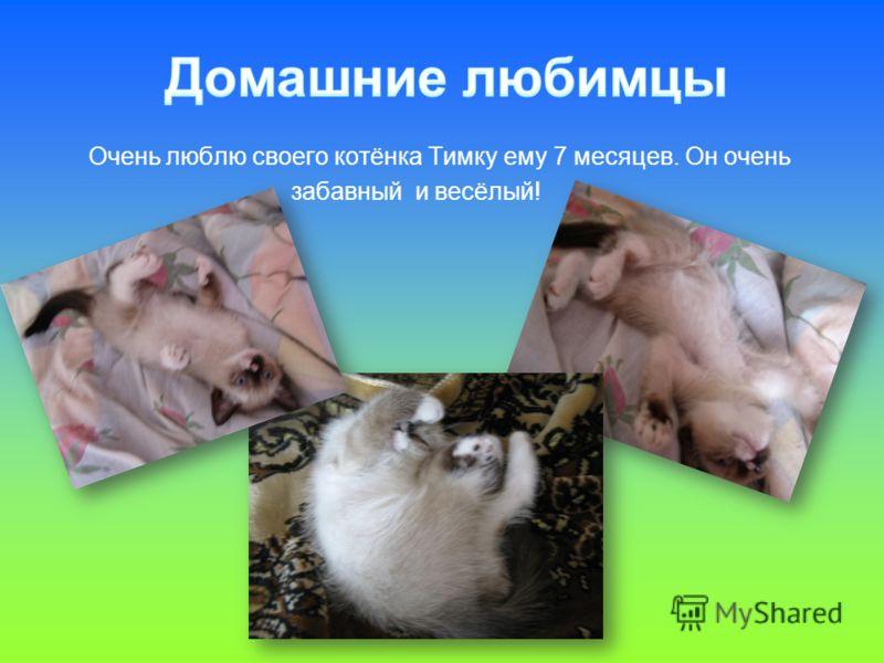 Очень люблю своего котёнка Тимку ему 7 месяцев. Он очень забавный и весёлый!