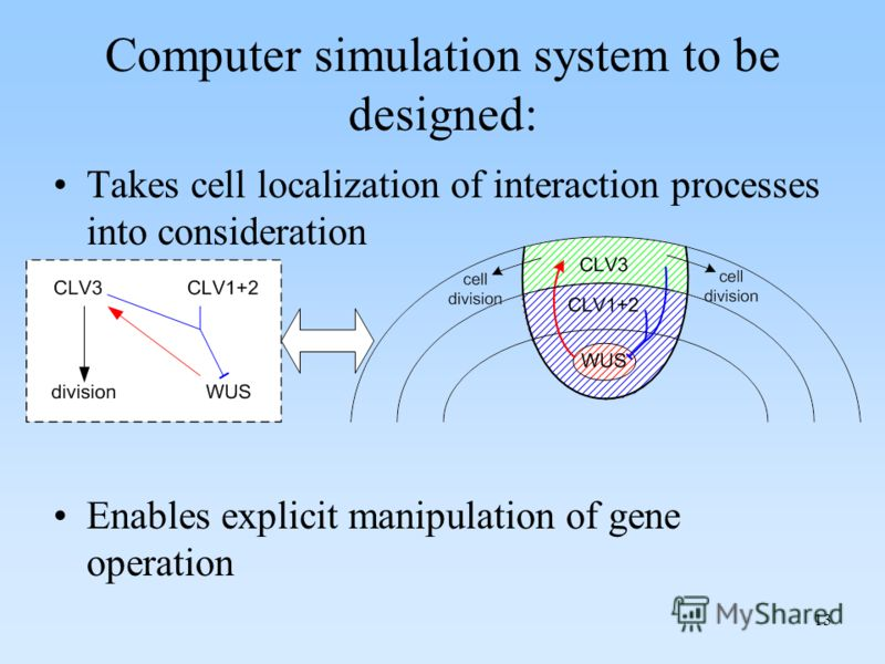 13 Computer simulation system to be designed: Takes cell localization of interaction processes into consideration Enables explicit manipulation of gene operation