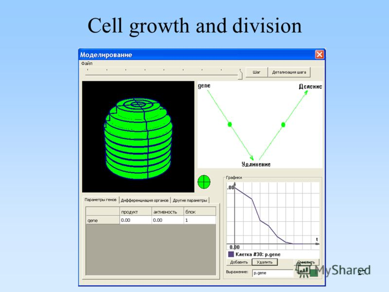 27 Cell growth and division