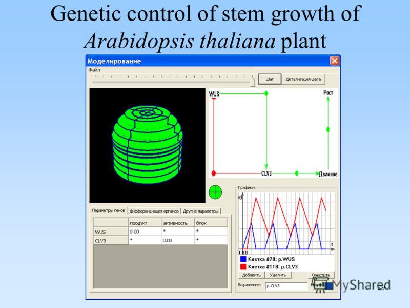 29 Genetic control of stem growth of Arabidopsis thaliana plant