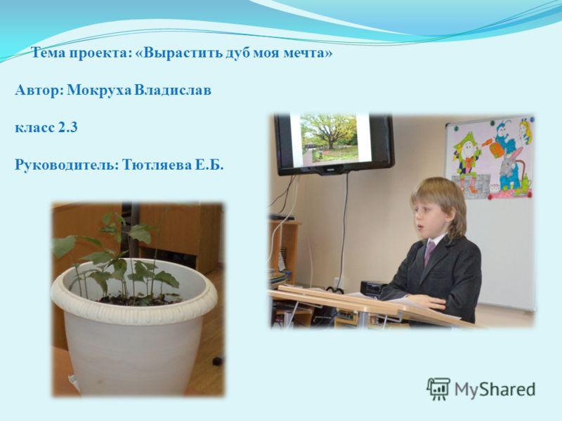 Тема проекта: «Вырастить дуб моя мечта» Автор: Мокруха Владислав класс 2.3 Руководитель: Тютляева Е.Б.