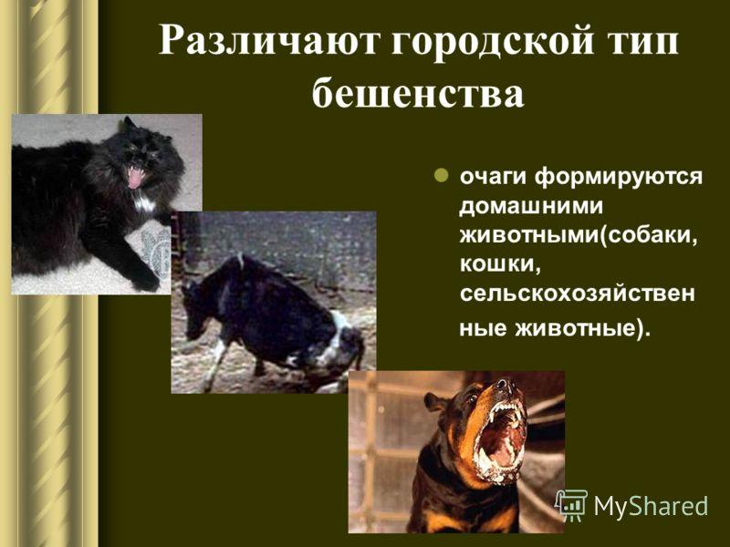 Различают природный тип бешенства очаги формируются дикими животными (волк, лисица, енотовидная собака, шакал, песец, скунс, мангуст, летучие мыши)