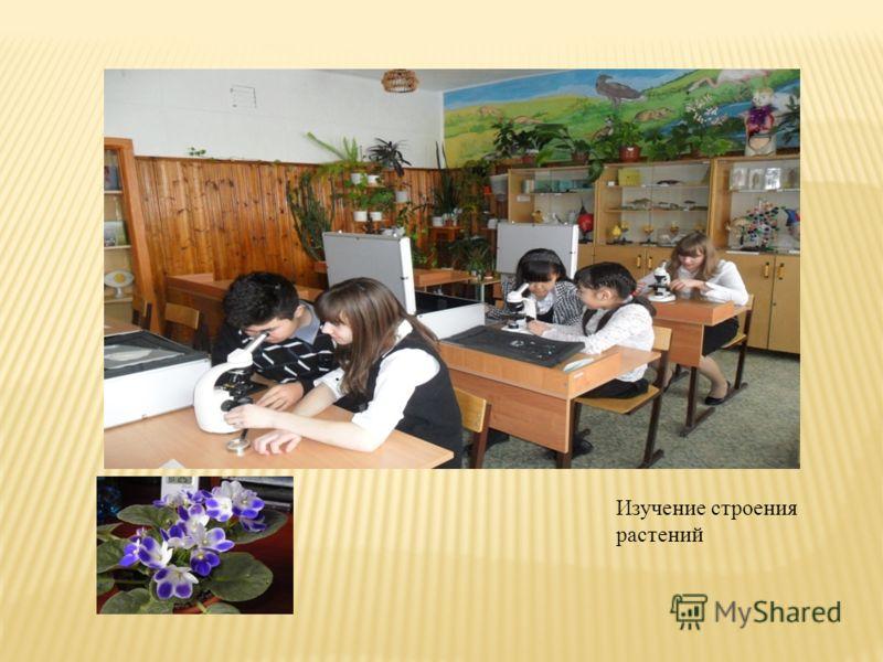Изучение строения растений