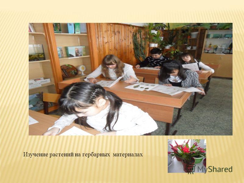 Изучение растений на гербарных материалах