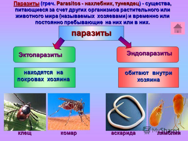 Паразиты (греч. Parasitos - нахлебник, тунеядец) - существа, питающиеся за счет других организмов растительного или животного мира (называемых хозяевами) и временно или постоянно пребывающие на них или в них. паразиты Эктопаразиты Эндопаразиты находя