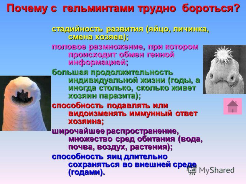 Почему с гельминтами трудно бороться? стадийность развития (яйцо, личинка, смена хозяев); половое размножение, при котором происходит обмен генной информацией; большая продолжительность индивидуальной жизни (годы, а иногда столько, сколько живет хозя