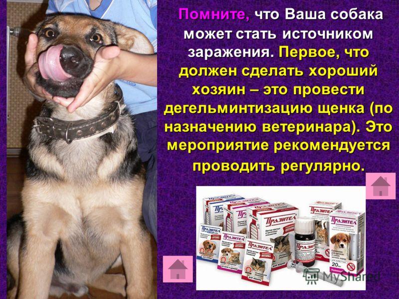 Помните, что Ваша собака может стать источником заражения. Первое, что должен сделать хороший хозяин – это провести дегельминтизацию щенка (по назначению ветеринара). Это мероприятие рекомендуется проводить регулярно.