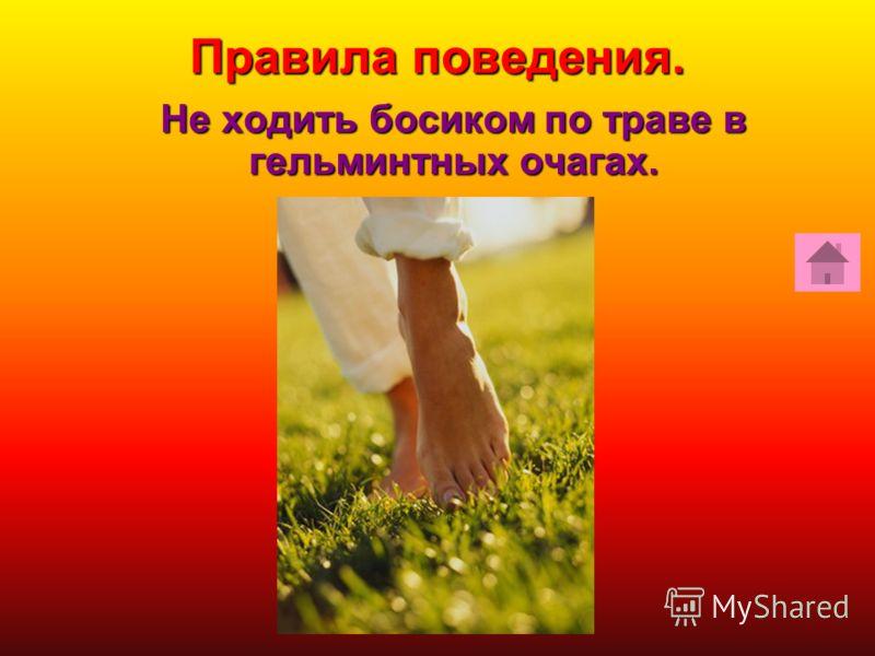 Правила поведения. Не ходить босиком по траве в гельминтных очагах.
