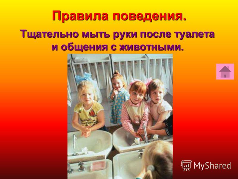 Тщательно мыть руки после туалета и общения с животными. Тщательно мыть руки после туалета и общения с животными. Правила поведения.