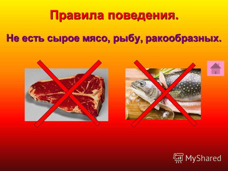 Не есть сырое мясо, рыбу, ракообразных. Правила поведения.