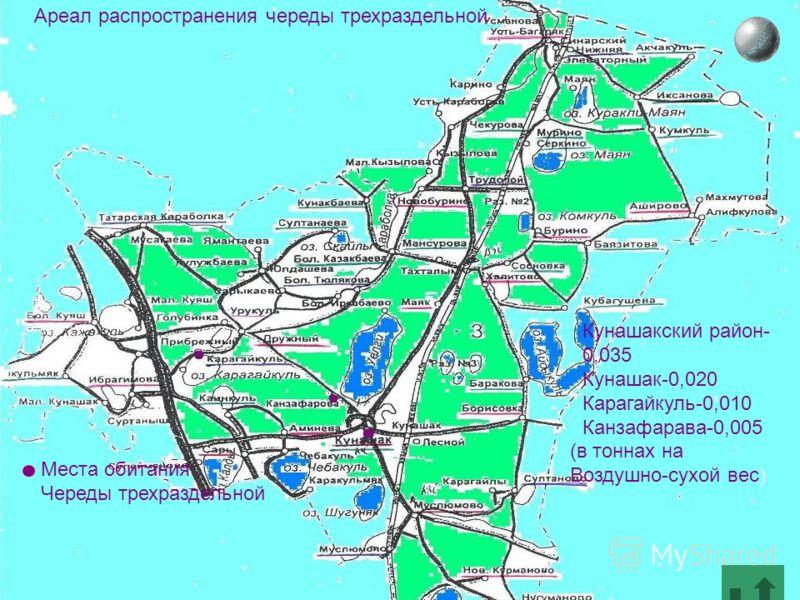 Места обитания Череды трехраздельной Ареал распространения череды трехраздельной Кунашакский район- 0,035 Кунашак-0,020 Карагайкуль-0,010 Канзафарава-0,005 (в тоннах на Воздушно-сухой вес)