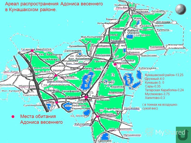 Ареал распространения Адониса весеннего в Кунашакском районе. Места обитания Адониса весеннего. Кунашакский район-13,25 Дружный-4,0 Кунашак-5, 0 Сары-0,35 Татарская Караболка-0,24 Муслюмово-3,75 Халитово-0,3 ( в тоннах на воздушно- сухой вес)